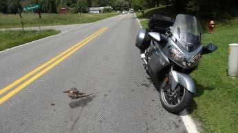 Roadkill!
